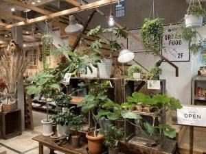 京都店の観葉植物コーナーのご紹介 / mumokuteki goods&wears京都