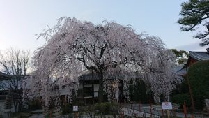 マルシェと京都店スタッフ募集のお知らせ/mumokuteki goods&wears京都店